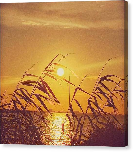 Beach Sunsets Canvas Print - Golden #sunset #enlight #msgulfcoast by Joan McCool