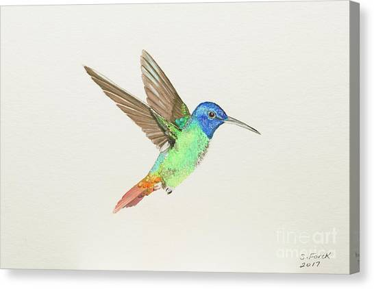 Golden-tailed Sapphire Canvas Print