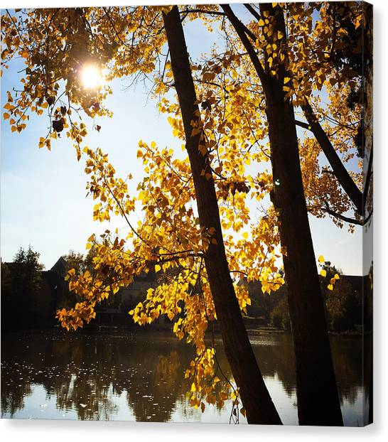 Germany Canvas Print - Golden Trees In Autumn Sindelfingen Germany by Matthias Hauser
