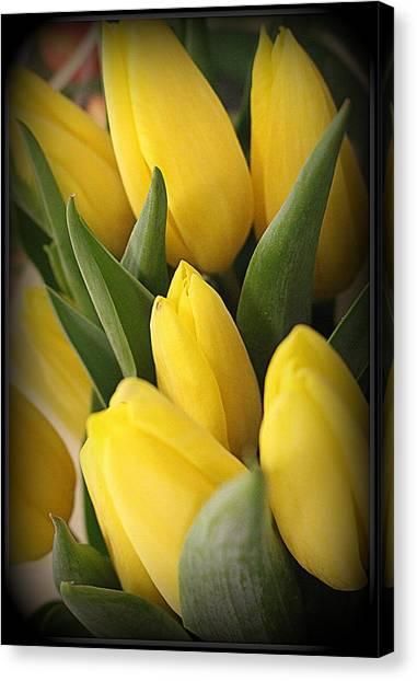Golden Tulips Canvas Print