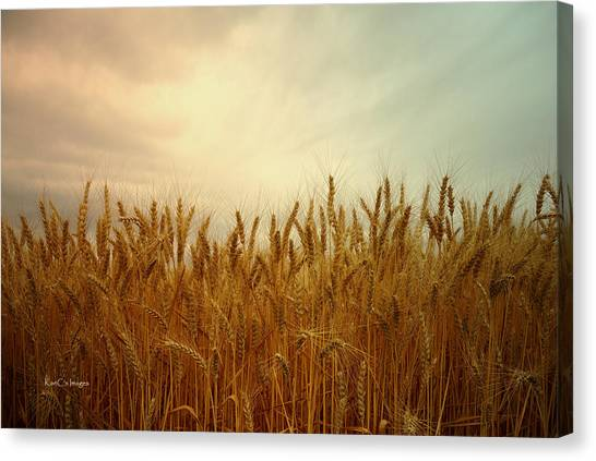 Golden Wheat Canvas Print