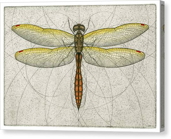 Golden Winged Skimmer Canvas Print