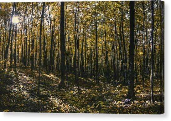 Amber Canvas Print - Golden Woods by Scott Norris