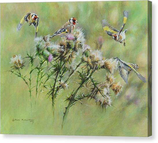 Goldfinches On Thistle Canvas Print