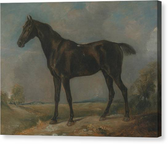 English Horse Canvas Print - Golding Constable's Black Riding Horse by John Constable