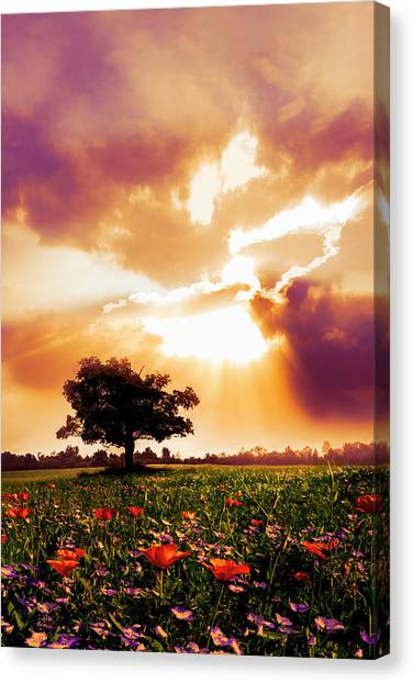Poppys Canvas Print - Golds At Sunset After The Rain by Debra and Dave Vanderlaan