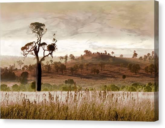 Canvas Print - Gondwana Boab by Holly Kempe