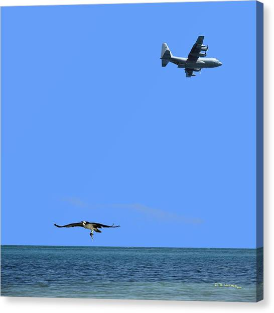 Canvas Print featuring the photograph Herky Bird And Osprey by R B Harper