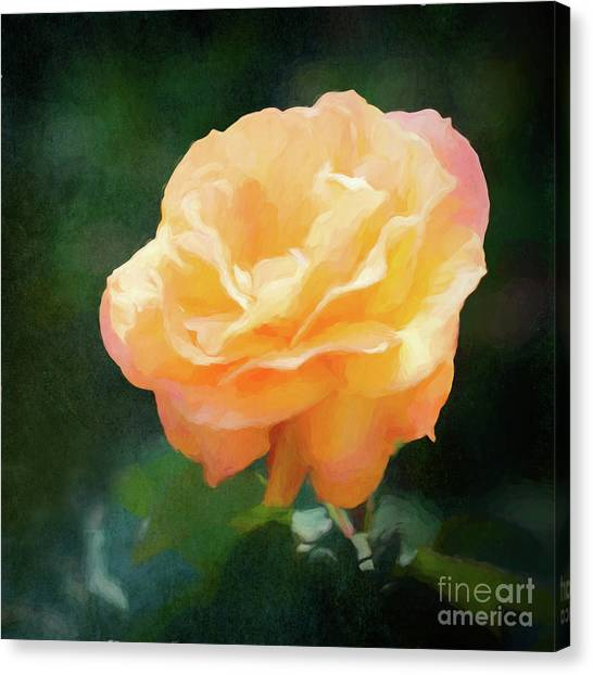 Good As Gold Painted Rose Canvas Print
