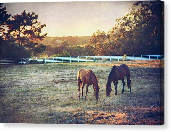 Ca Canvas Print - Good Company by Laurie Search