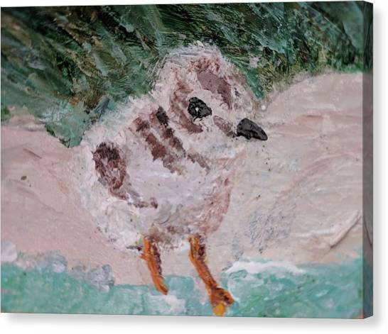Good Harbor Piping Plover Chick #1 Canvas Print