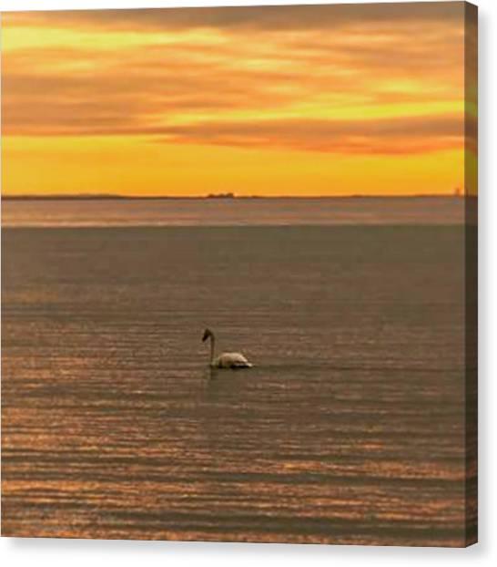 Lake Sunrises Canvas Print - Good Morning :) #sunrise #swan #lake by Nila Sivatheesan