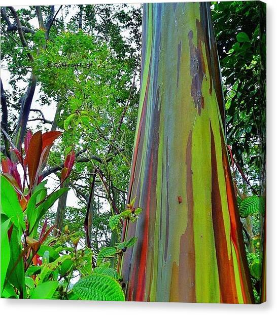 Rainbows Canvas Print - Good Morning Peeps, Rainbow Eucalyptus by Raffaele Salera