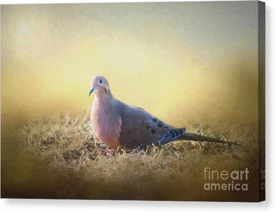Good Mourning Dove Canvas Print