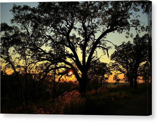 Canvas Print featuring the photograph Good Night Tree by Viviana  Nadowski