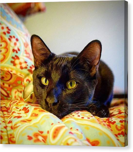 Panthers Canvas Print - Goodnight Friends! Tomorrow I'm Going by Sirius Black Adventure Cat