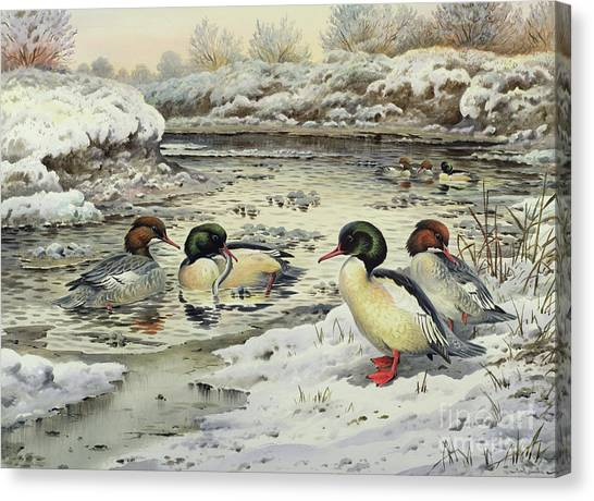 Snow Bank Canvas Print - Goosanders by Carl Donner