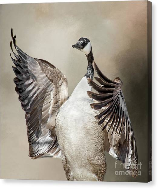Goose Chase Canvas Print