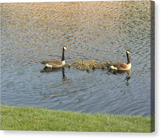 Goose Pond 1 Canvas Print by Nancy Ferrier