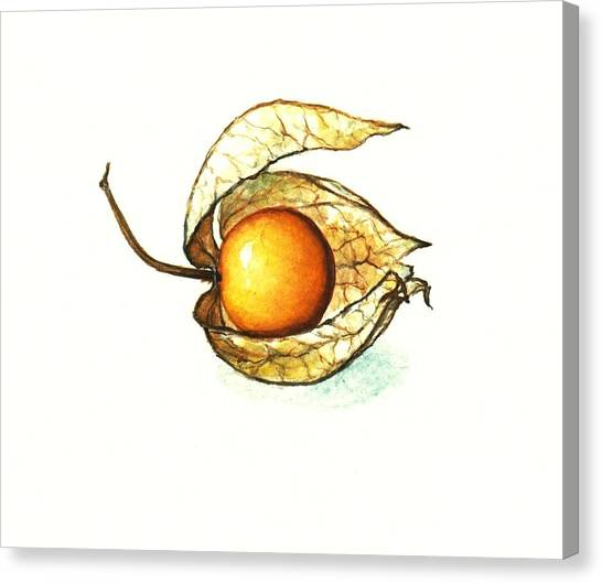 Gooseberry Canvas Print