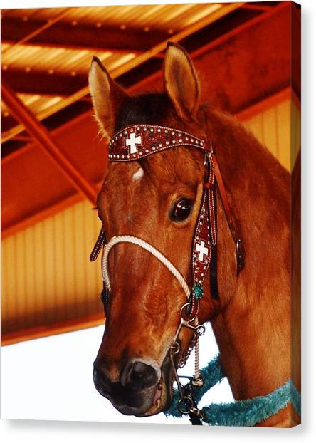 Gorgeous Horse And Bridle Canvas Print