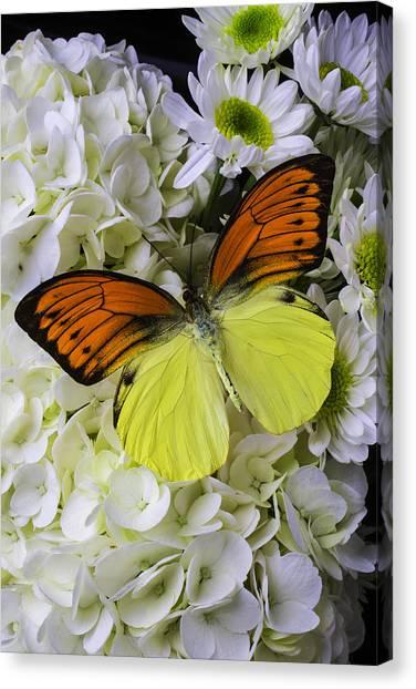 Pom-pom Canvas Print - Gorgeous Orange Yellow Butterfly by Garry Gay