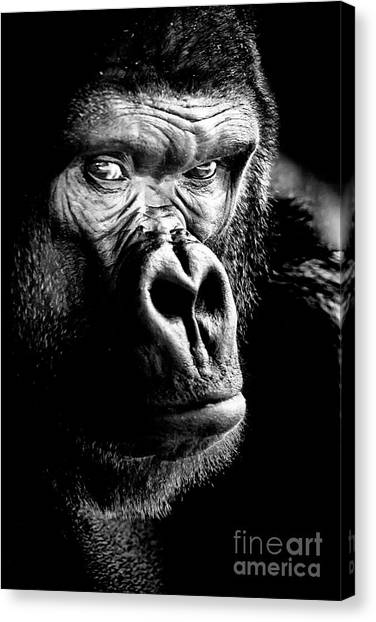 Gorilla Canvas Print, Photographic Print, Art Print, Framed Print, Greeting Card, Iphone Case, Canvas Print