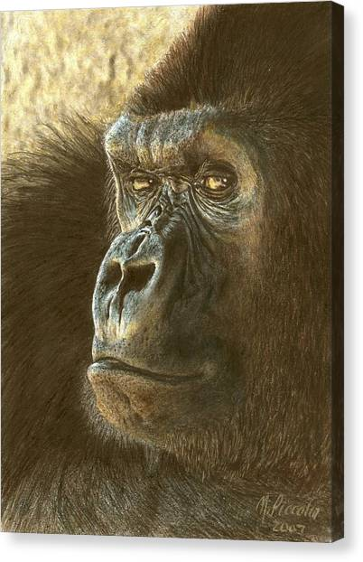 Primates Canvas Print - Gorilla by Marlene Piccolin