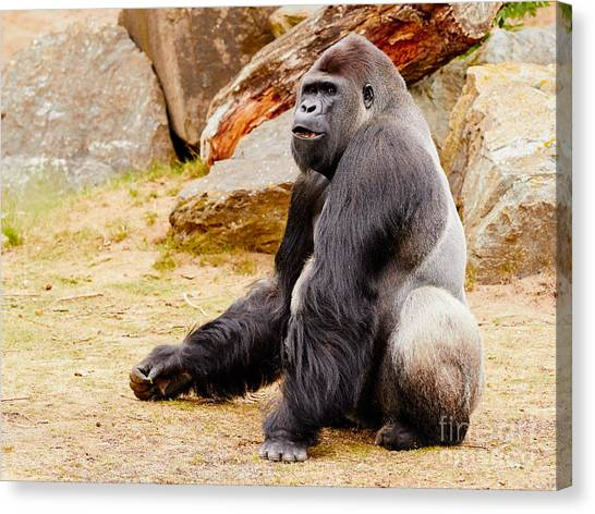 Gorilla Sitting Upright Canvas Print