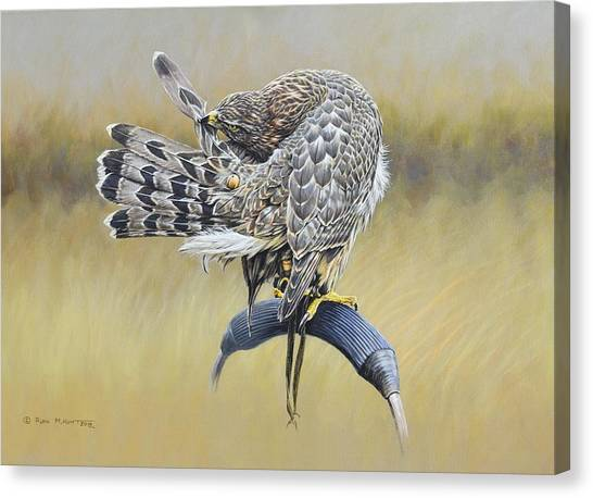 Canvas Print featuring the painting Goshawk Preening by Alan M Hunt