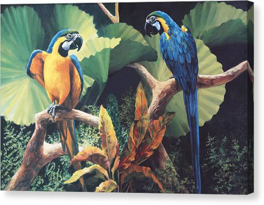 Macaws Canvas Print - Gossips by Laurie Hein