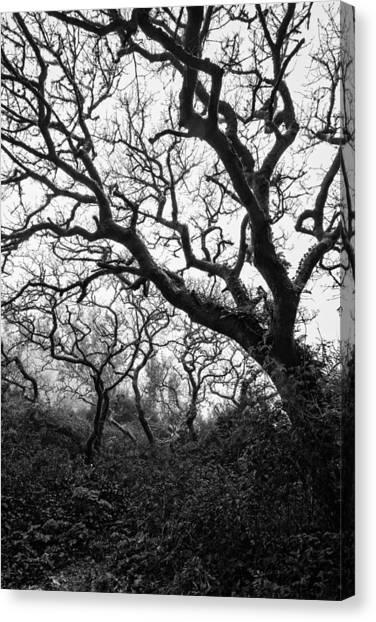 Gothic Woods II Canvas Print