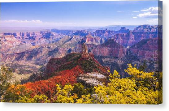 Shrub Canvas Print - Grand Arizona by Chad Dutson