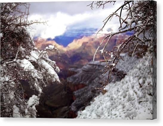 Grand Canyon Branch Canvas Print