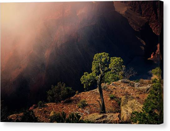 Grand Canyon Juniper Canvas Print