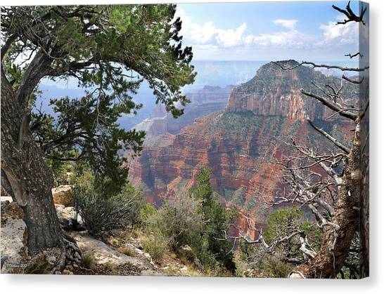 Grand Canyon North Rim - Through The Trees Canvas Print