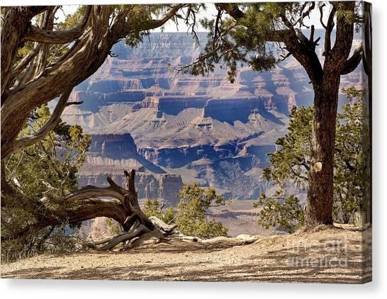 Arid Canvas Print - Grand Canyon Through The Trees by Jane Rix