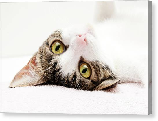 Andee Design Puss Canvas Print - Grand Kitty Cuteness by Andee Design
