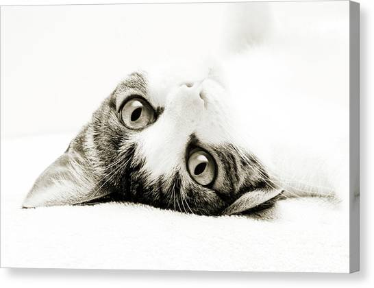 Andee Design Kitties Canvas Print - Grand Kitty Cuteness Bw by Andee Design