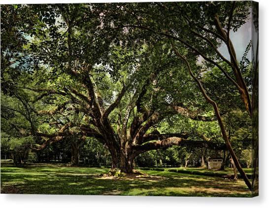 Grand Oak Tree Canvas Print