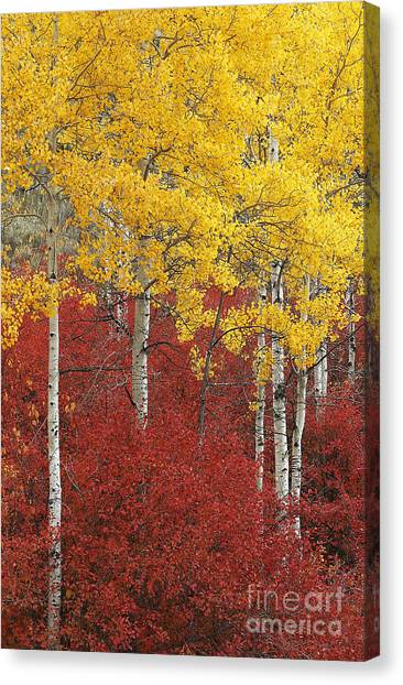 Grand Teton Viii Canvas Print by John Blumenkamp