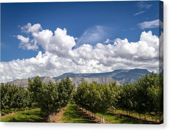 Grand Valley Orchards Canvas Print