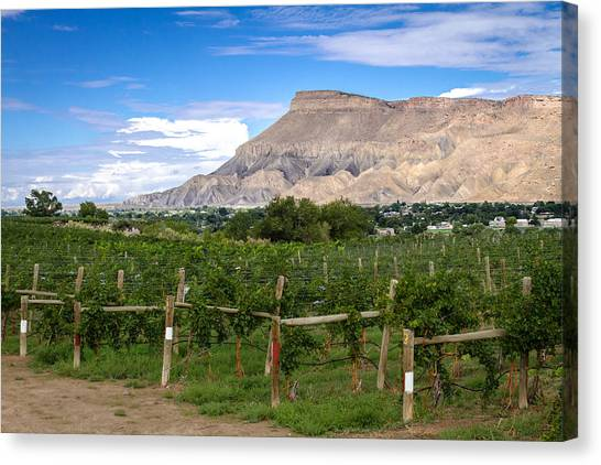 Grand Valley Vineyards Canvas Print