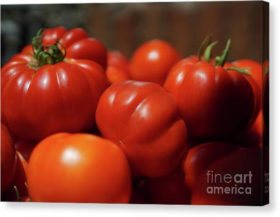 Grandpas Tomatoes Canvas Print