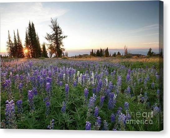 Boise National Forest Canvas Print - Granite Mountains Sunrise by Idaho Scenic Images Linda Lantzy