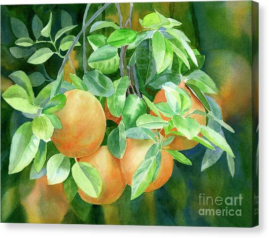 Grapefruits Canvas Print - Grapefruit With Background by Sharon Freeman