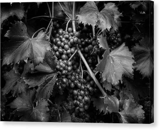 Grapes In Black And White Canvas Print