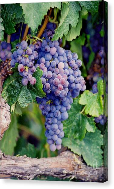 Canvas Print featuring the photograph Grapes by Sandy Adams
