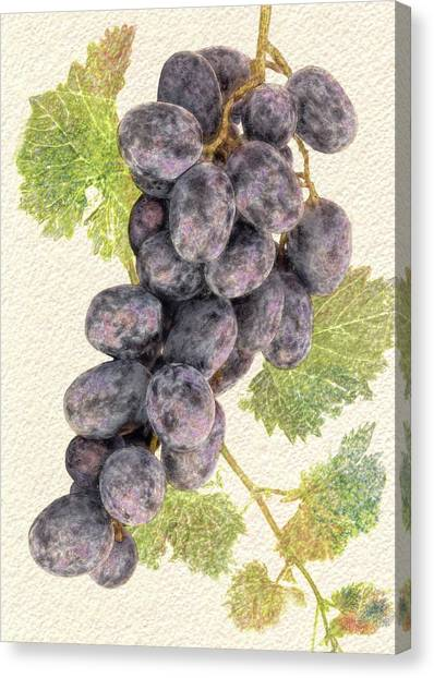Luscious Grapes Canvas Print