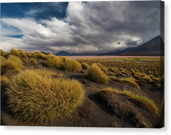 Grass Hat Canvas Print by Aaron Bedell